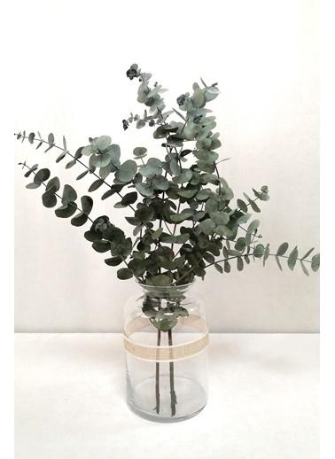 Kuru Çiçek Deposu Şoklanmis Küçük Yeşil Okaliptus Demeti Yeşil